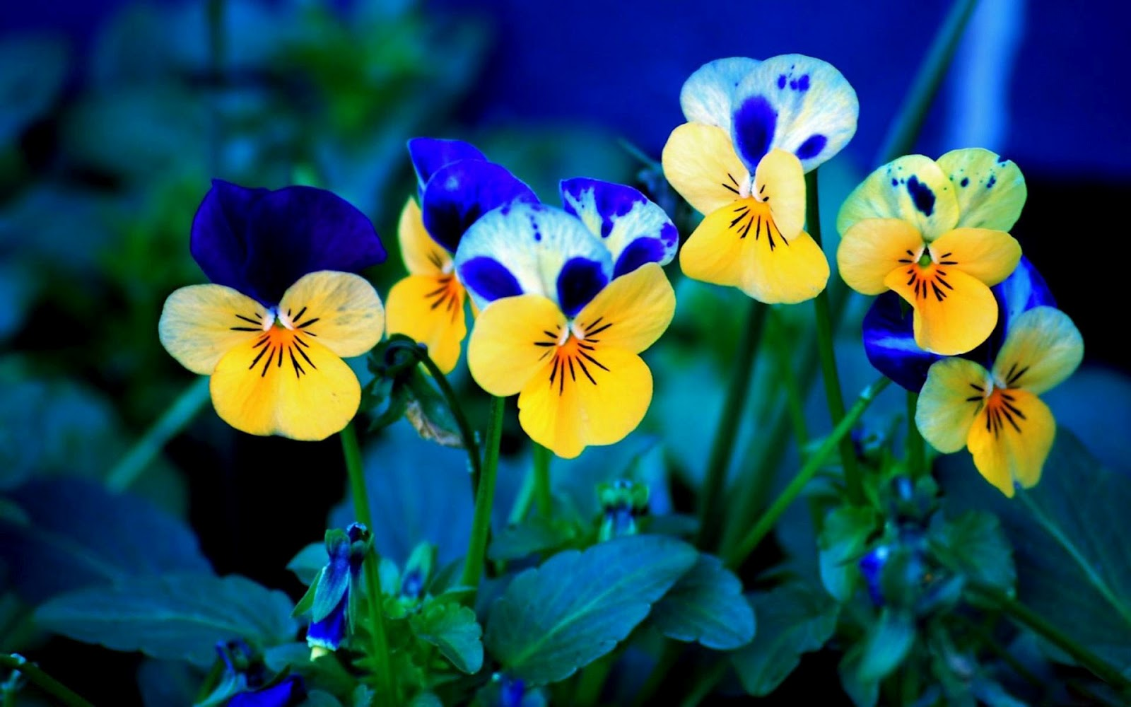beautiful flowers nature hd download wallpaper for pc free