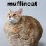 Profile picture of Muffin cat