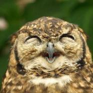 Profile picture of Majestic Owl