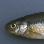 Profile picture of Minnow