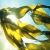 Avatar of Seaweedgrass