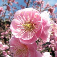 Profile picture of Tranquil Blossom