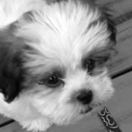 Profile picture of alex8397