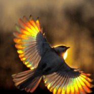 Profile picture of violetpolkadots