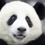 Profile picture of Panda-Kun