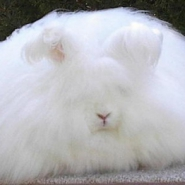Group logo of Stuffed with fluff